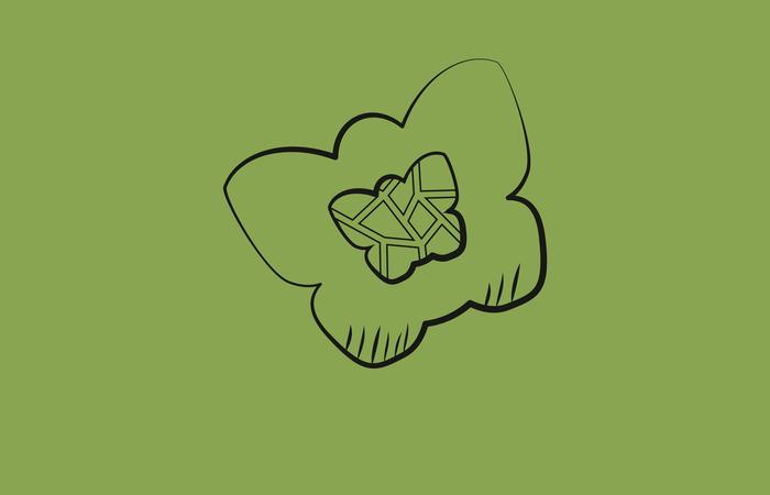 PAPILLON  RHUBARBE